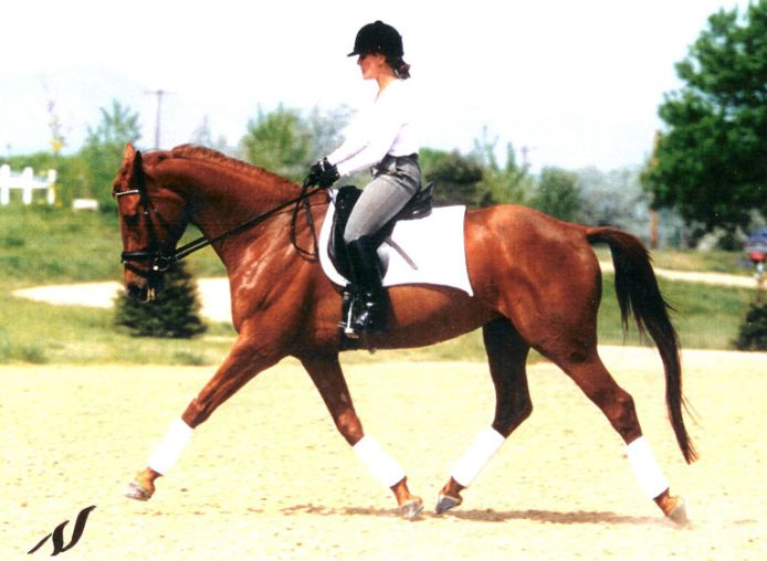 equestrian rider with leather riding boots on the horse